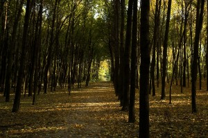 A path through the woods by a holistic drug and alcohol rehab